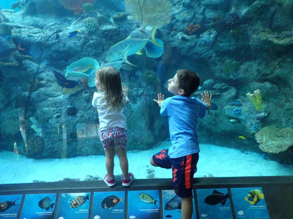 Finding Dory...at the Aquarium of the Pacific